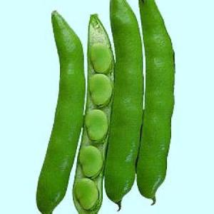 野菜の種/種子 さぬき長莢早生・そら豆 1dl(メール便可能)タキイ種苗|vg-harada