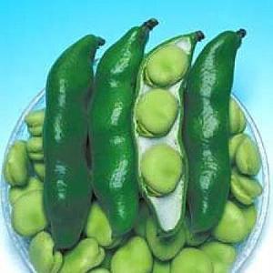 野菜の種/種子 三連・そら豆 1L(大袋)タキイ種苗|vg-harada