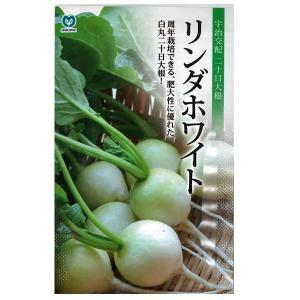 野菜の種/種子 リンダホワイト ダイコン・大根 だいこん 340粒 (メール便可能)|vg-harada