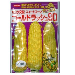 野菜の種/種子 ゴールドラッシュ90・とうもろこし 200粒(メール便発送)サカタのタネ 種苗|vg-harada
