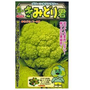 野菜の種/種子 きみどり君 グリーンカリフラワー 50粒 (メール便可能)|vg-harada