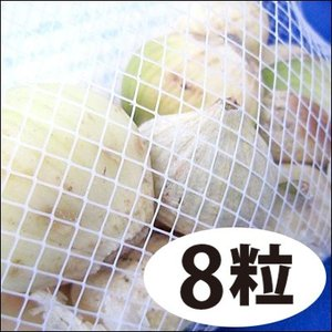 野菜・種/苗 無臭にんにく種子 Lサイズ 8粒|vg-harada