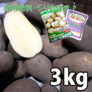 お買い得♪野菜・種/苗[春じゃがいも種芋]北海道産 メークイン  じゃがいも種芋・生もの種 量り売り3kg+じゃがいも専用肥料+シリカ付きセット|vg-harada