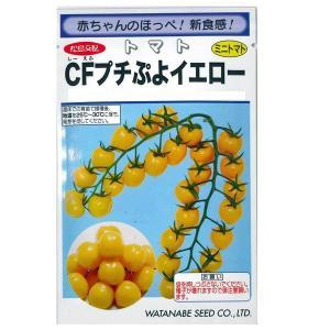 野菜の種/種子 CFプチぷよイエロー・ミニトマト とまと 11粒(メール便可能)|vg-harada
