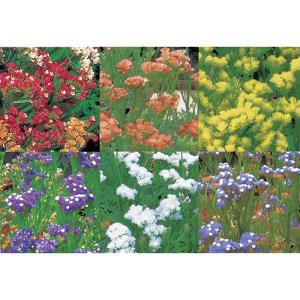 花の種(営利用)スターチス リモニウム エキストラ ミックス 2ml サカタのタネ|vg-harada
