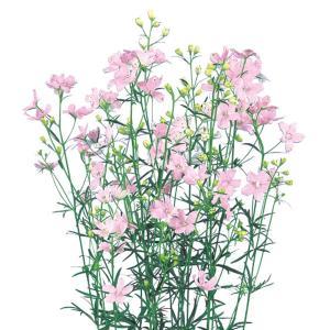 花の種(営利用)デルフィニウム ヒエンソウ プデル シェルピンク 1000粒 サカタのタネ 種苗(メール便発送)|vg-harada
