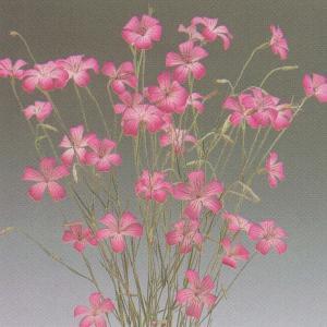 花の種(営利用)アグロステンマ ギタゴ 10ml タキイ種苗(メール便発送)|vg-harada