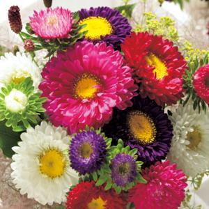 花の種(営利用)アスター プリンセス 混合 10ml タキイ種苗 vg-harada