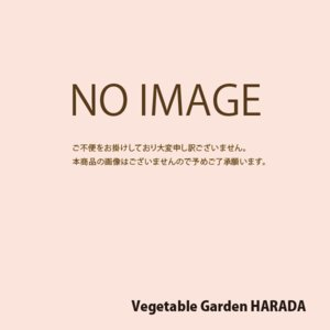 花の種(営利用) マリーゴールド アフリカン種 万寿菊高性大輪 混合(アフリカントール) 1l タキイ種苗|vg-harada