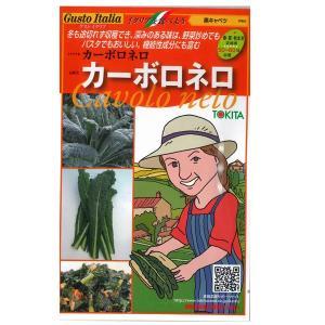 野菜の種/種子 カーボロネロ 黒キャベツ  イタリア野菜  40粒 (メール便可能)|vg-harada