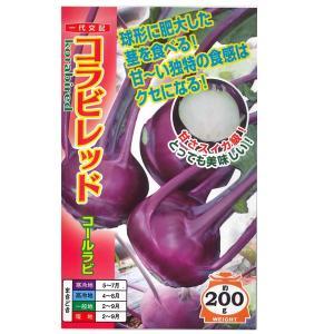 野菜の種/種子 コラビレッド コールラビ 100粒 (メール便可能)|vg-harada