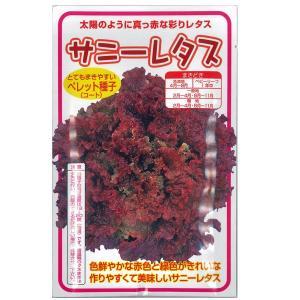 野菜の種/種子 サニーレタス 100粒 ペレット(コート)種子 (メール便可能)|vg-harada