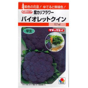 野菜の種/種子 バイオレットクイン・紫カリフラワー 0.7ml (メール便可能)タキイ種苗|vg-harada