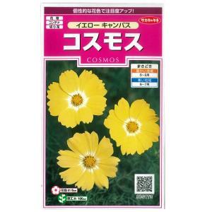 花の種 コスモス[イエローキャンパス] 2ml (メール便発送)|vg-harada