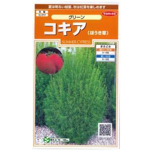 花の種 コキア ホウキグサ ほうきぐさ ほうき草 グリーン 0.5ml サカタのタネ|vg-harada