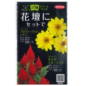 花の種 ジニア×けいとう 2種アソートパック (メール便可能) サカタのタネ|vg-harada