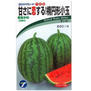 野菜の種/種子 恋おかね・スイカ すいか 10粒 (メール便可能)|vg-harada