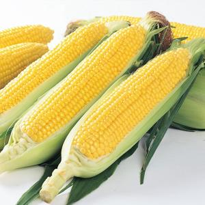 野菜の種/種子 ゴールドラッシュ88・とうもろこし トウモロコシ 2000粒(大袋)サカタのタネ 種苗|vg-harada