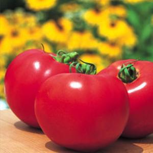 野菜の種/種子 桃太郎ファイト・トマト 18粒(メール便可能)タキイ種苗|vg-harada