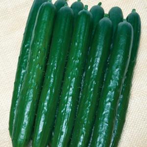野菜の種/種子 Vシャイン・キュウリ きゅうり 350粒(メール便可能/大袋)タキイ種苗 vg-harada