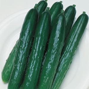野菜の種/種子 北進・キュウリ きゅうり 350粒(メール便可能/大袋)タキイ種苗 vg-harada
