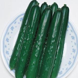 野菜の種/種子 つばさ・キュウリ きゅうり 350粒(メール便可能/大袋)タキイ種苗 vg-harada