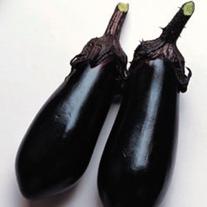 野菜の種/種子 千両・ナス 茄子 なす 2000粒(大袋)タキイ種苗|vg-harada