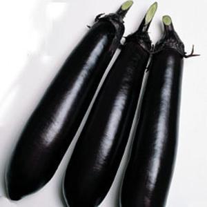 野菜の種/種子 長岡長・ナス 茄子 なす 75粒(メール便可能)タキイ種苗|vg-harada