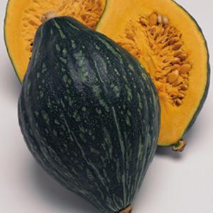 野菜の種/種子 ロロン・カボチャ かぼちゃ 100粒(メール便発送)タキイ種苗 vg-harada