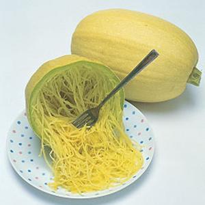 野菜の種/種子 金糸瓜・そうめん カボチャ かぼちゃ 100粒(メール便発送)タキイ種苗 vg-harada