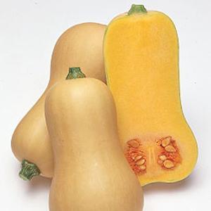 野菜の種/種子 バターナッツ・カボチャ かぼちゃ 100粒(メール便可能)タキイ種苗|vg-harada