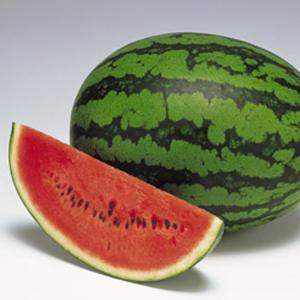 野菜の種/種子 紅まくら・スイカ 200粒(メール便可能)タキイ種苗|vg-harada