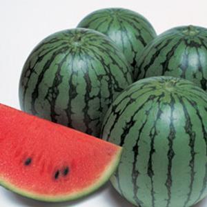野菜の種/種子 紅しずく・スイカ 200粒(メール便可能)タキイ種苗|vg-harada