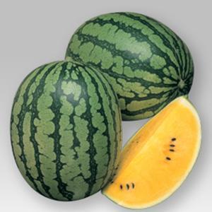 野菜の種/種子 シュガームーン・スイカ 11粒(メール便可能)タキイ種苗|vg-harada