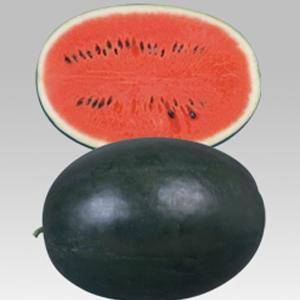 野菜の種/種子 ピロマスタ2・スイカ 15粒(メール便可能)タキイ種苗|vg-harada