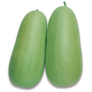 野菜の種/種子 沼目白瓜・シロウリ 500粒(メール便可能)タキイ種苗|vg-harada