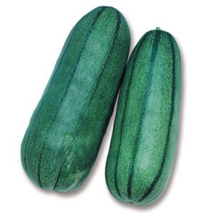 野菜の種/種子 青大長縞瓜・シロウリ 500粒(メール便可能)タキイ種苗|vg-harada