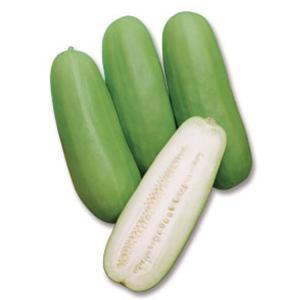 野菜の種/種子 さぬき白瓜・シロウリ 500粒(メール便可能)タキイ種苗|vg-harada