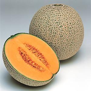 野菜の種/種子 レノン・メロン 100粒(メール便可能/大袋)タキイ種苗|vg-harada