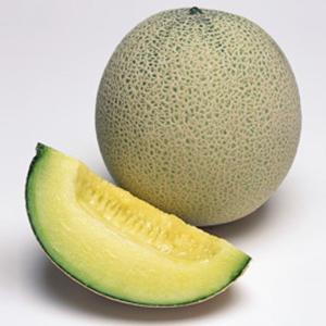 野菜の種/種子 パンナTF・メロン 100粒(メール便可能/大袋)タキイ種苗|vg-harada
