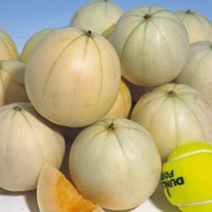 野菜の種/種子 かわい〜ナ・メロン 100粒(メール便可能/大袋)タキイ種苗|vg-harada