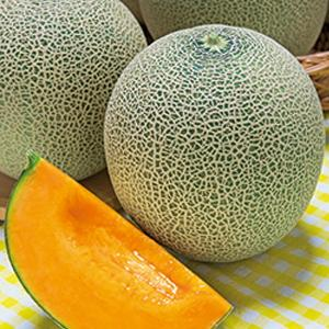 野菜の種/種子 レノンウエーブ・メロン 100粒(メール便可能/大袋)タキイ種苗|vg-harada