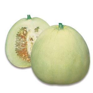 野菜の種/種子 ニューメロン・マクワ 50粒(メール便可能)タキイ種苗|vg-harada