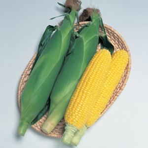 野菜の種/種子 おひさまコーン7・とうもろこし トウモロコシ 60粒(メール便可能)タキイ種苗|vg-harada