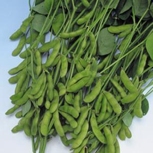 野菜の種/種子 快豆黒頭巾・えだまめ 1L(大袋)タキイ種苗|vg-harada