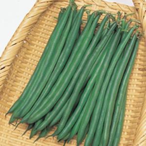 野菜の種/種子 恋みどり・つるなしいんげん 50ml(メール便可能)タキイ種苗|vg-harada