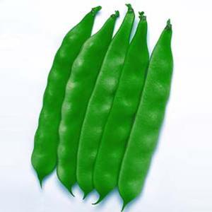 野菜の種/種子 モロッコ・つるありいんげん 30ml(メール便発送)タキイ種苗|vg-harada