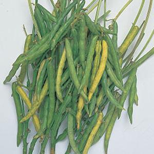野菜の種/種子 丹波大納言小豆・小豆 35ml(メール便発送)タキイ種苗|vg-harada