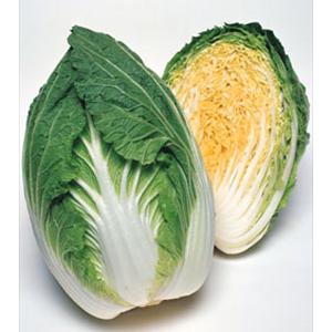 野菜の種/種子 春笑・ハクサイ ペレット5000粒(大袋)タキイ種苗|vg-harada