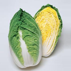 野菜の種/種子 晴舞台65・ハクサイ ペレット5000粒(大袋)タキイ種苗|vg-harada